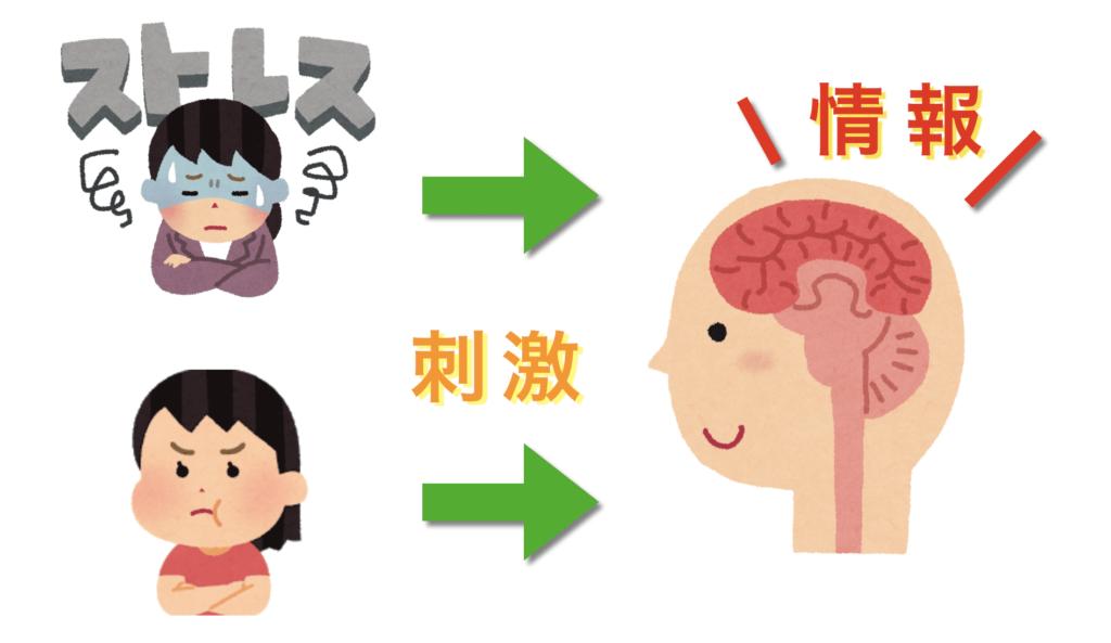 ストレスで脳が疲労し自律神経が乱れる