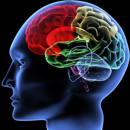 機能神経学